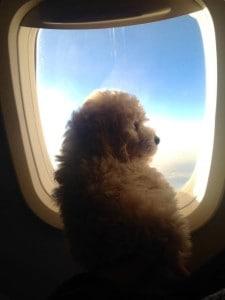 mabel airplane